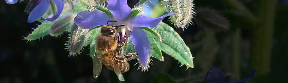 Imkerij 't BijenOord